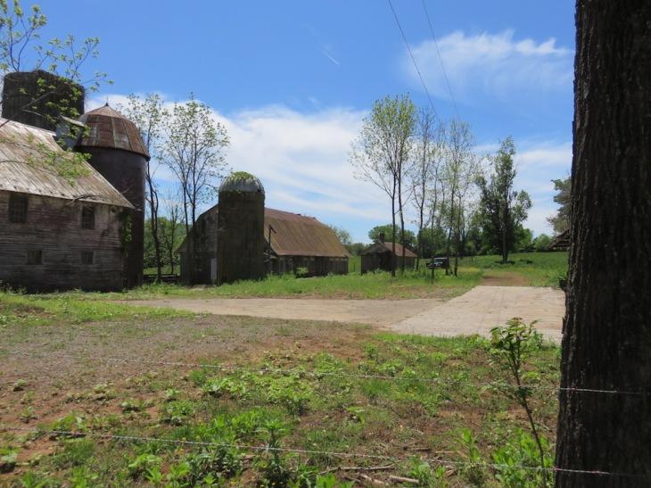15 barnyard May 16, 2016.jpg